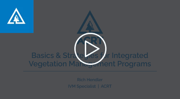 Basics and Strategies for IVM